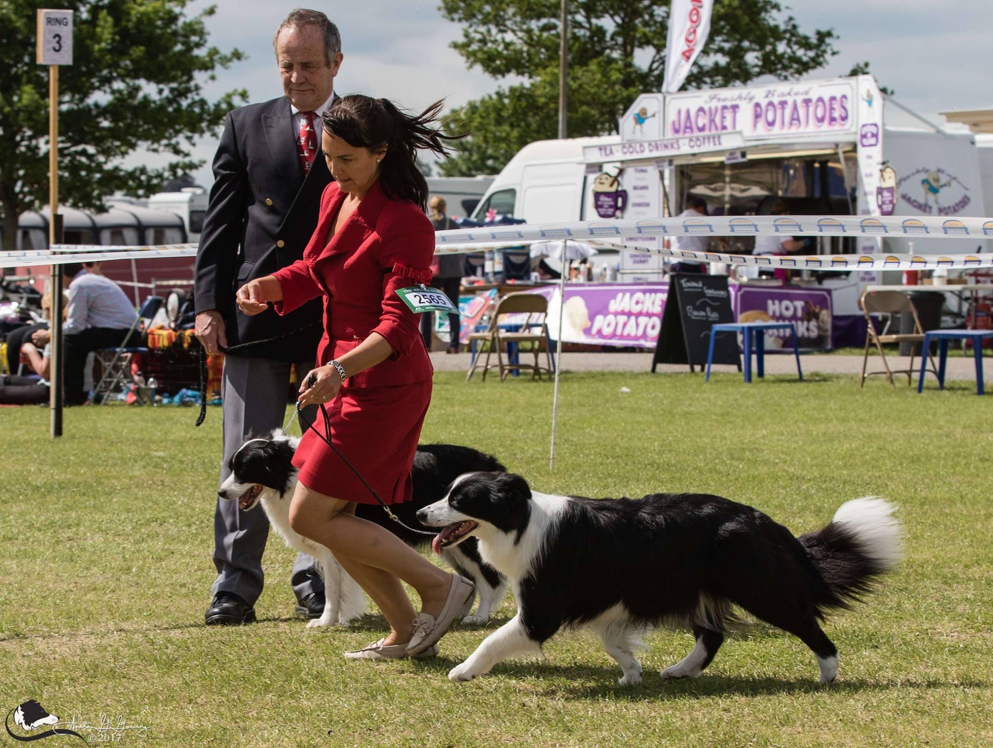 Junior Dog Training And Handling